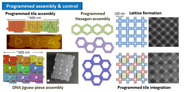 Origami DNA | STEM | 320x640